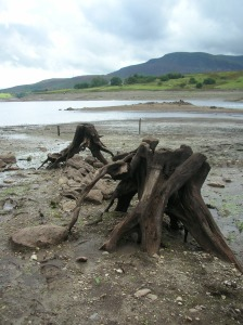 From https://en.wikipedia.org/wiki/File:Capel_Celyn_exposed_tree_stumps.jpg